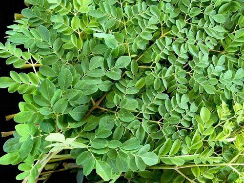 Semua Tentang Moringa Powder - 4 Manfaat Kesehatan Menggunakan Moringa Powder radikal bebas yang menyebabkan
